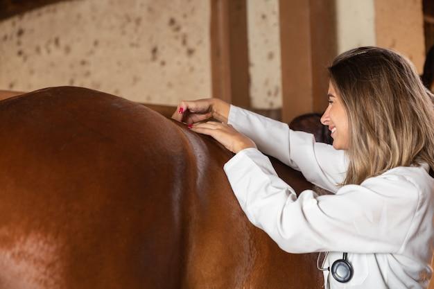 Cavalo de exame veterinário.