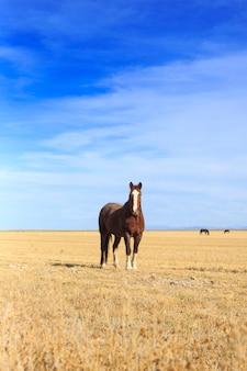 Cavalo de pé no campo vertical