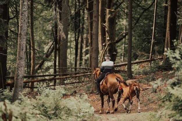 Cavalo de vaqueiro na floresta
