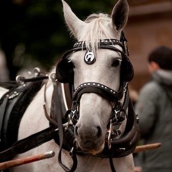 Cavalo do transporte fora do central park em manhattan, new york city, eua.
