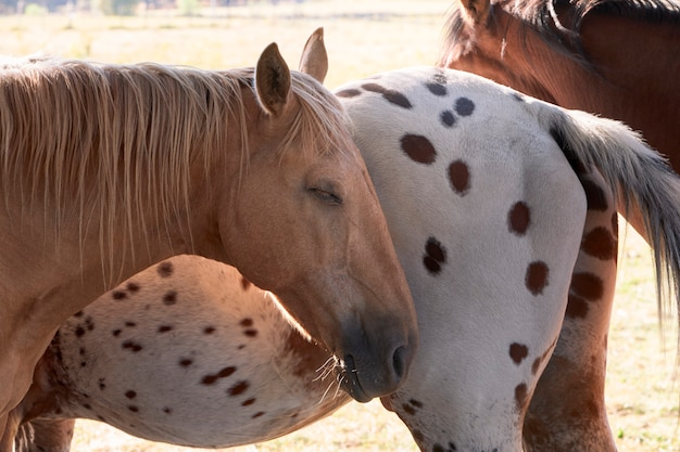 Cavalo dormindo ao lado de outros cavalos