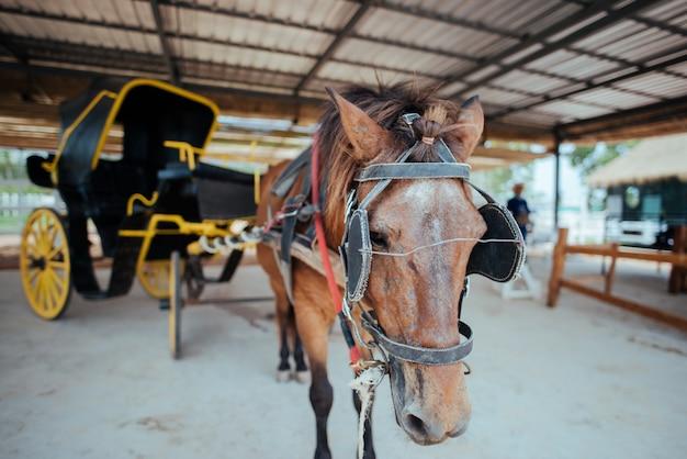 Cavalo e uma bela carruagem antiga na cidade velha