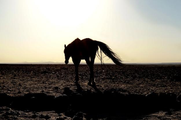 Cavalo em aus - namíbia