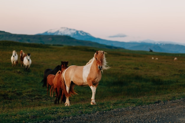 Cavalo em um campo, animais de fazenda, série natureza
