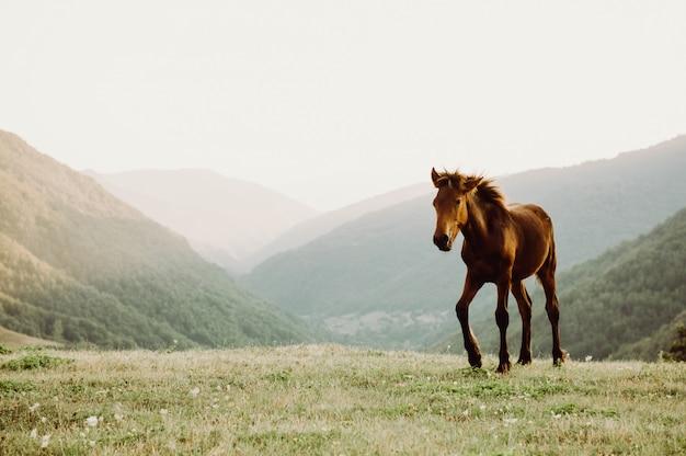 Cavalo, em, um, campo, pastar, em, um, campo, montanha