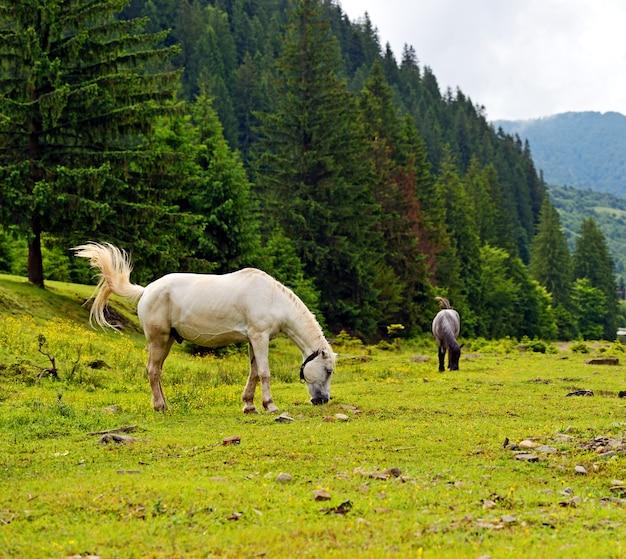 Cavalo em um fundo de montanha