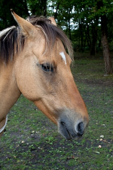 Cavalo em um parque
