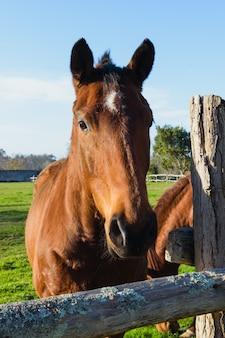 Cavalo em uma fazenda perto de uma cerca de madeira