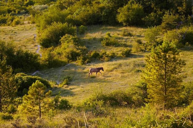 Cavalo em uma pastagem montanhosa entre árvores e arbustos