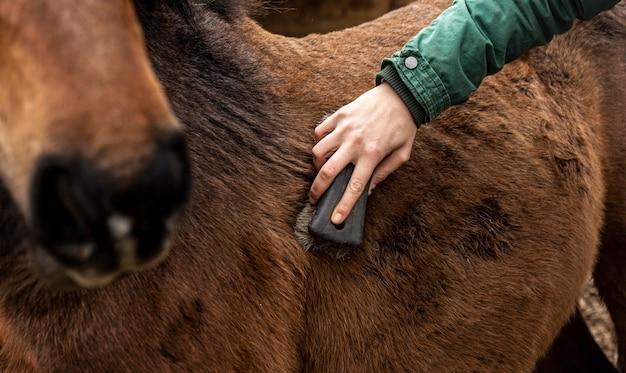 Cavalo escovando a mão em close-up