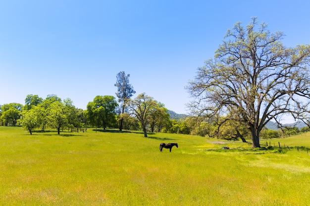 Cavalo escuro em pastagens de prados de califórnia