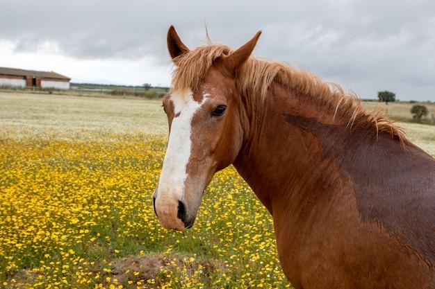 Cavalo livre em um prado de flor