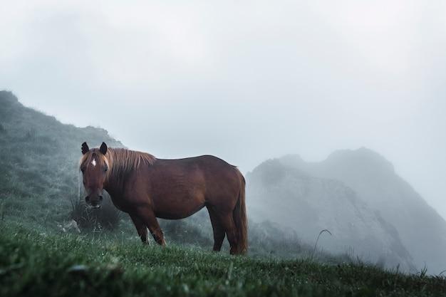 Cavalo livre no topo das peñas de aya