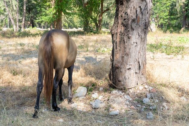 Cavalo marrom do lado da cauda