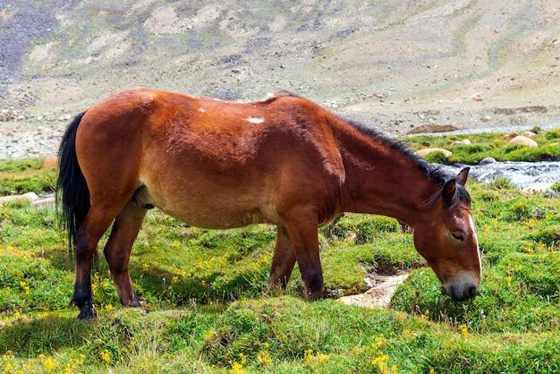 Cavalo marrom em pé em campo verde.