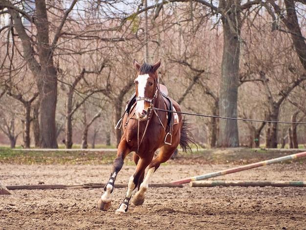 Cavalo marrom está correndo em um paddock.