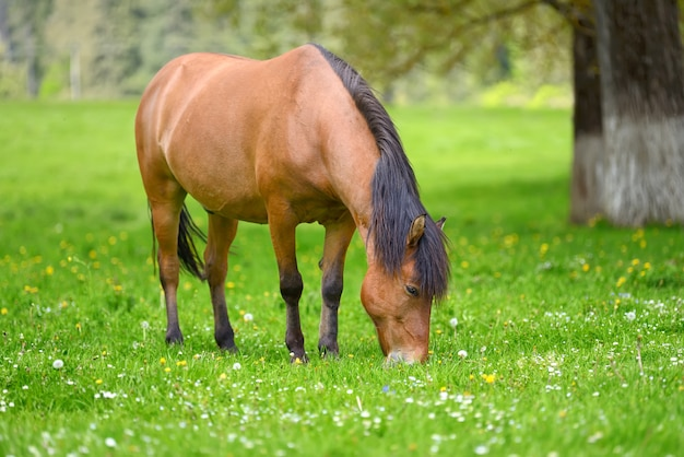 Cavalo marrom no pasto na primavera