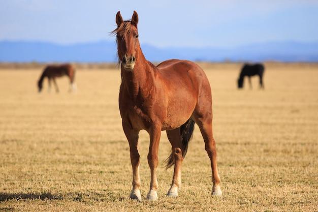 Cavalo marrom no rancho ocidental