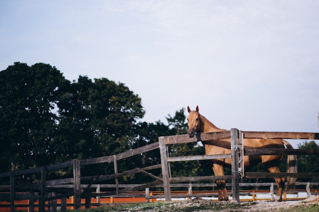 Cavalo marrom no rancho