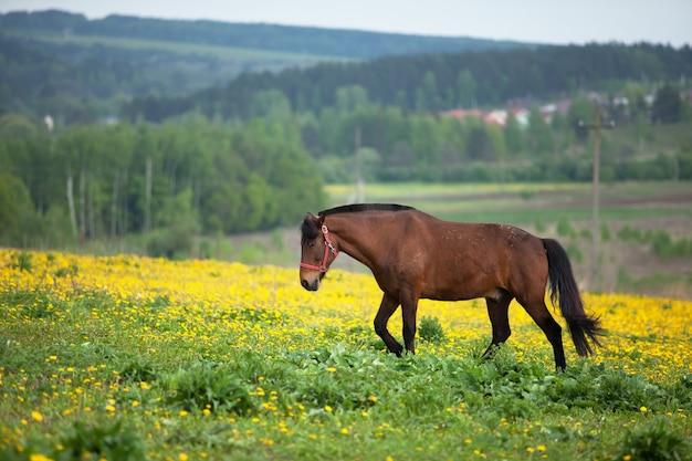 Cavalo marrom pastando em um campo de flores. um dia de sol brilhante.