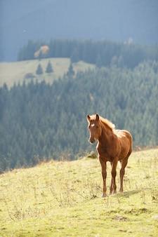 Cavalo marrom pastando no gramado em um fundo de montanhas