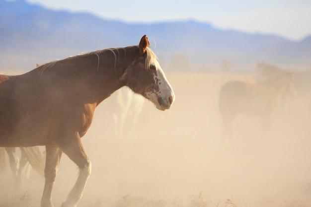 Cavalo mustang no rebanho empoeirado
