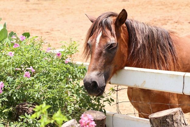 Cavalo na fazenda