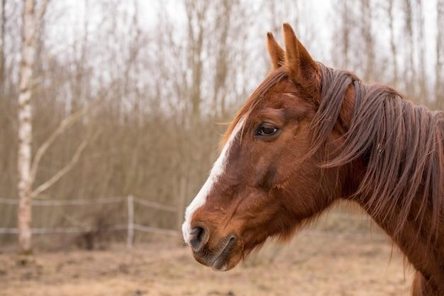 Cavalo na natureza. retrato de um cavalo, cavalo castanho