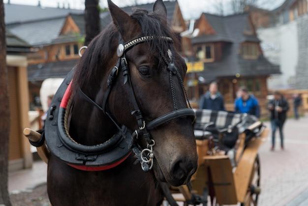 Cavalo na vila de zakopane, polônia, polônia