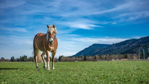 Cavalo no campo
