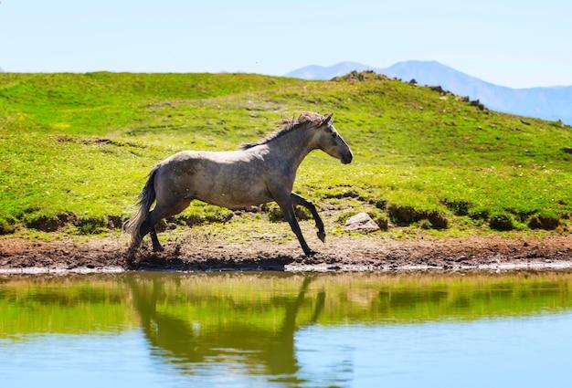 Cavalo no lago nas montanhas