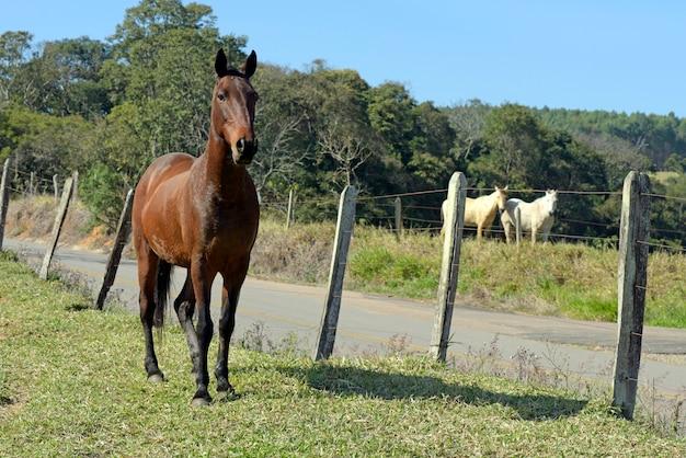 Cavalo no pasto com grama verde e árvores