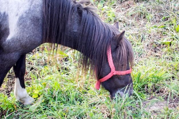 Cavalo no pasto de verão.horse pasto no prado