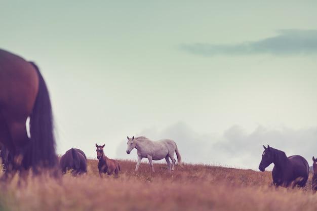 Cavalo no pasto nas montanhas, temporada de outono