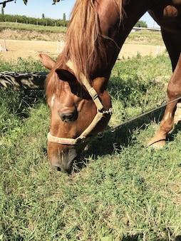 Cavalo no pasto
