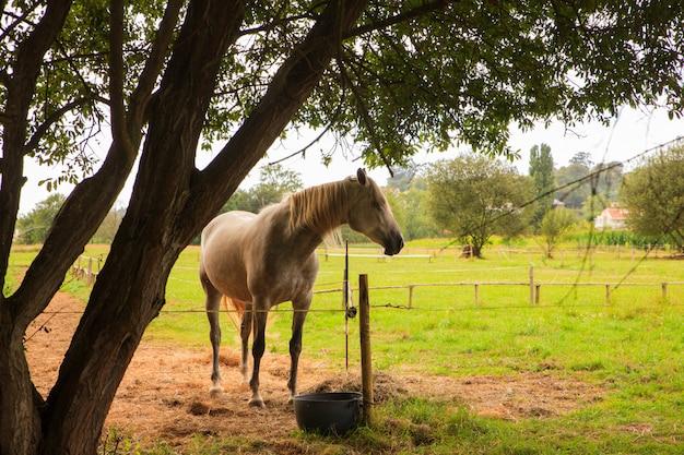 Cavalo nos animais da fazenda