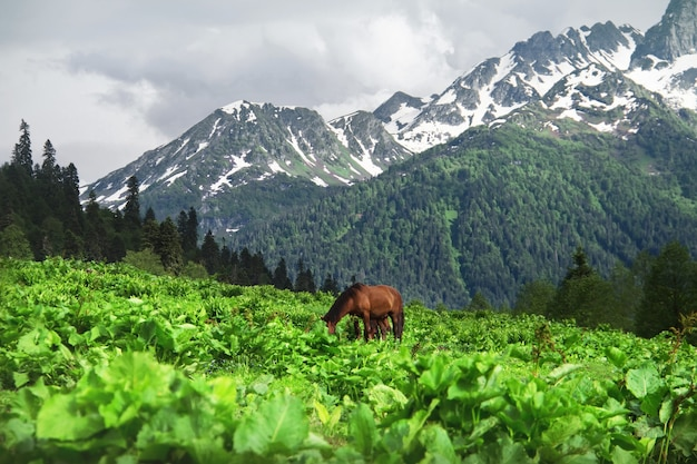 Cavalo pastando em um prado montanhas do cáucaso avadhara república da abkházia