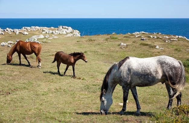 Cavalo pastando nas montanhas de nueva de llanes, na espanha