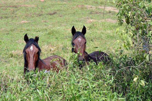 Cavalo pastando nas pastagens vizinhas