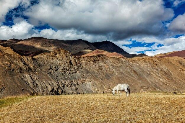 Cavalo pastando no himalaia