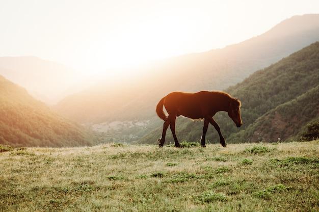 Cavalo pastando no pasto da montanha