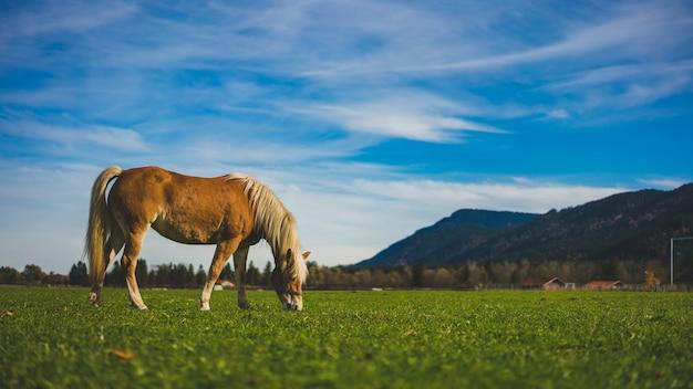 Cavalo pastando no pasto verde