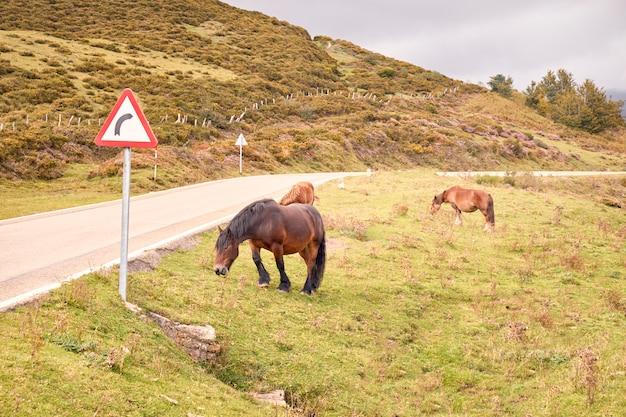 Cavalo pastando perigosamente ao lado de uma estrada