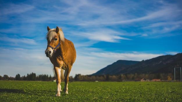 Cavalo saudável em um pasto retrato com uma paisagem natural de mountain view