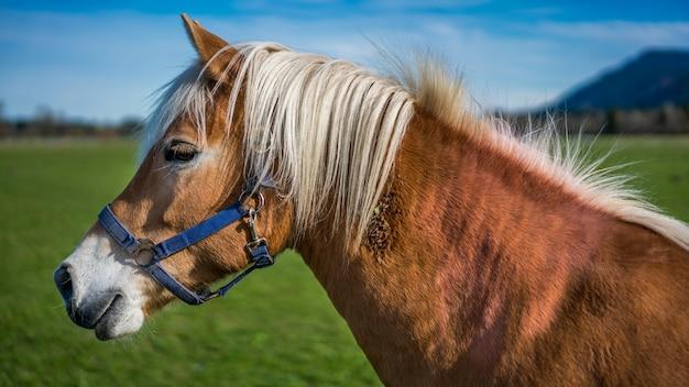 Cavalo saudável em um pasto