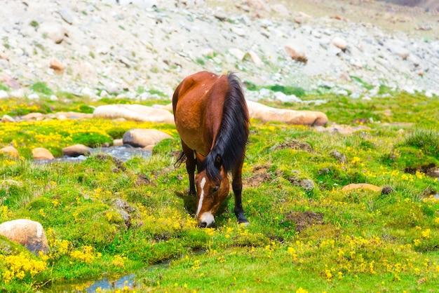 Cavalo selvagem em um pasto de verão verde com flores amarelas e pequeno riacho