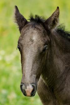 Cavalo selvagem