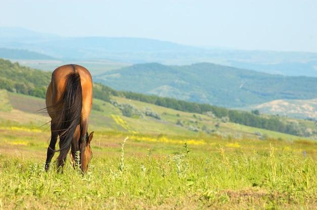 Cavalo solitário pastando