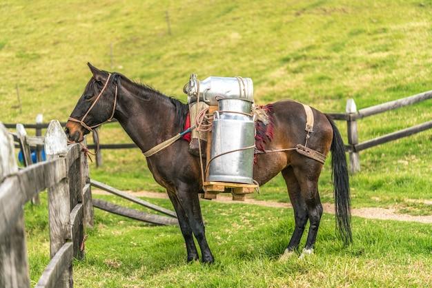 Cavalo transportando leite de vaca