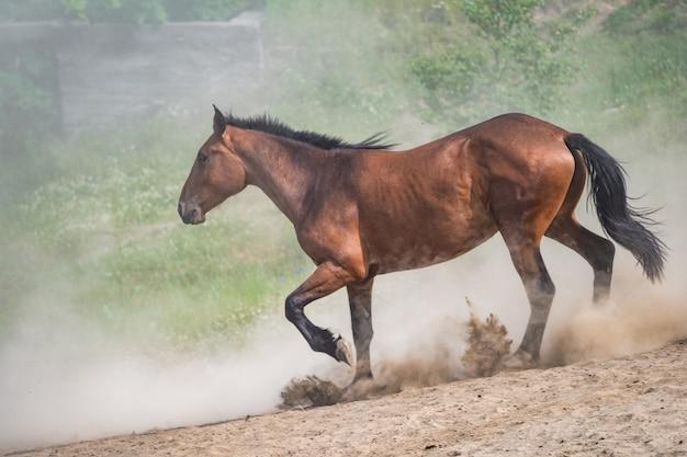 Cavalo vermelho com crina longa e escura levantando poeira